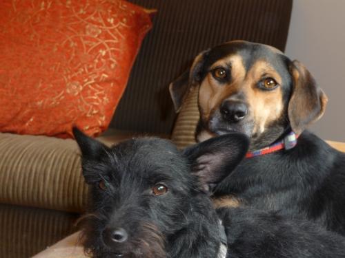 Stuey (left) & Dexxy
